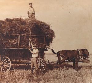 שורשים חקלאיים תמה