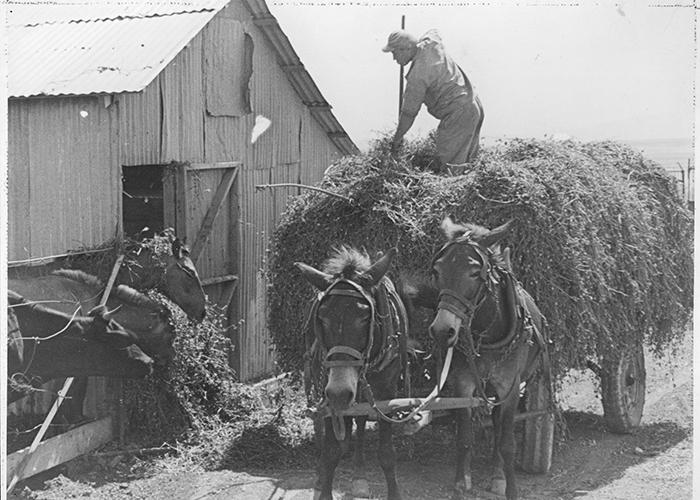 חווה חקלאית