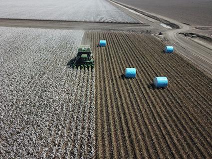 Blue wrap field