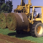 Turf-Big-Roll