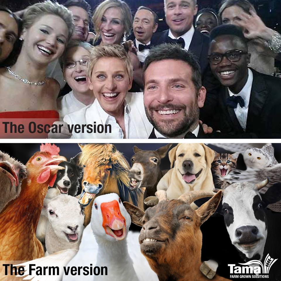 the Farm version off the Oscar selfie