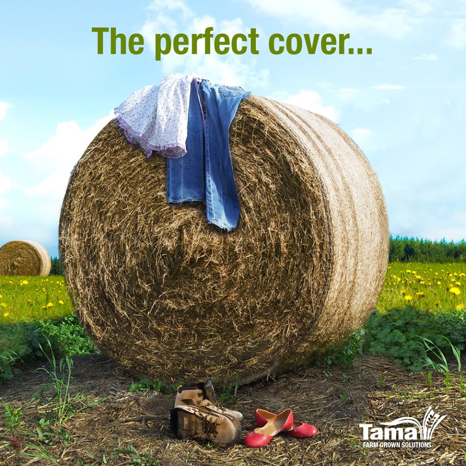 The perfect cover...