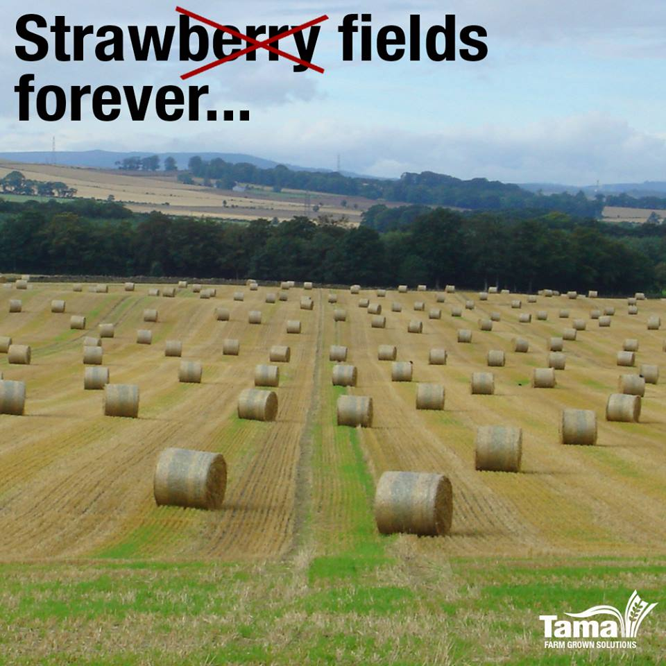Strawberry fields forever...
