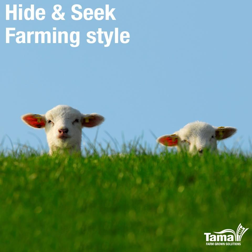 Hide & Seek Farming style
