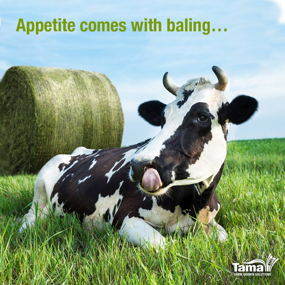 Appetite comes with baling...