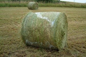 Bad Bale Wrapping