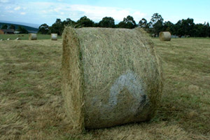 Bad Bale Netwrap