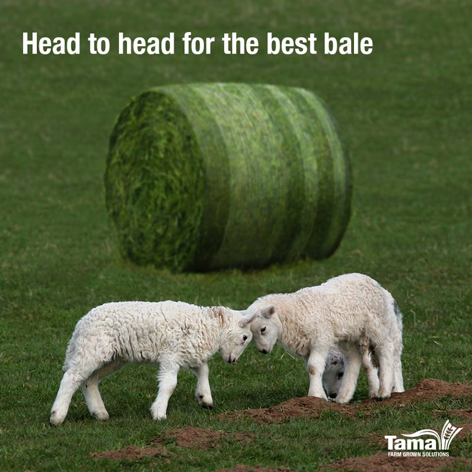 Head to head for the best bale