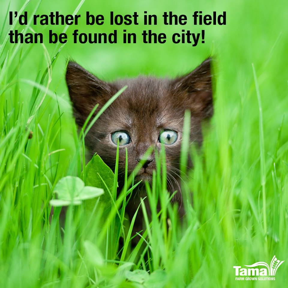 I'd rather be lost in the field than be found in the city!