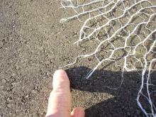 damaged net