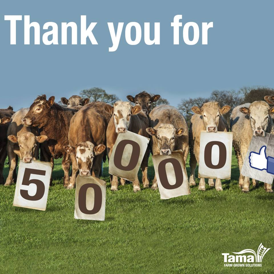 Thank you for 50000 likes