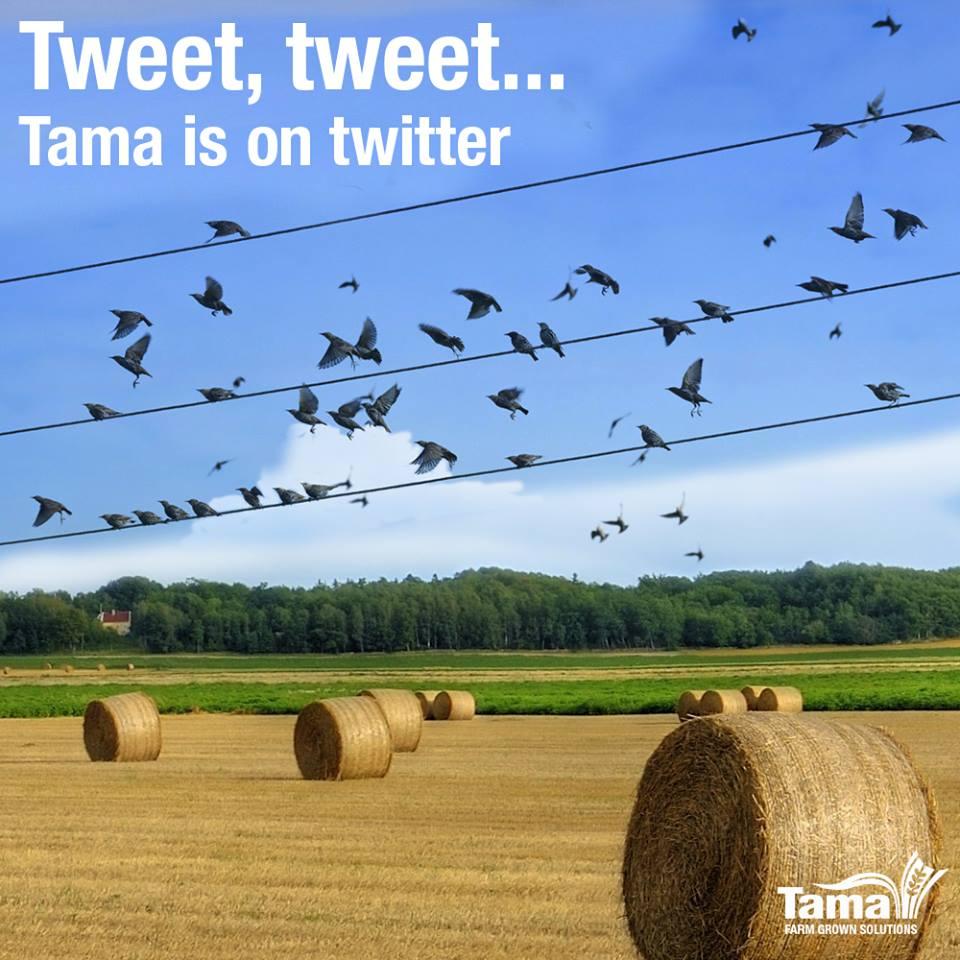 Tweet, tweet...Tama is on twitter