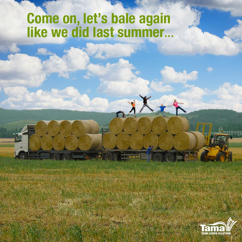 Come on, let's bale again like we did last summer...