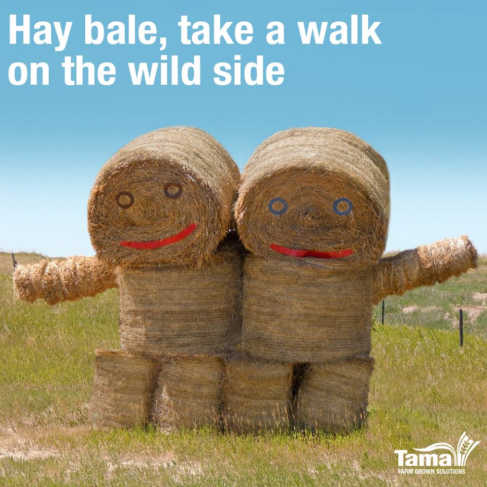 Hay bale, take a walk on the wild side