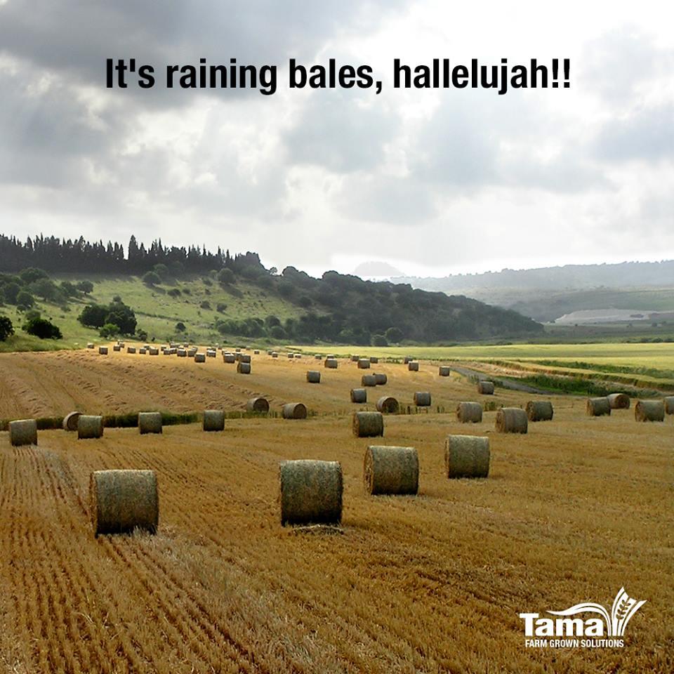 It's raining bales, hallelujah!!