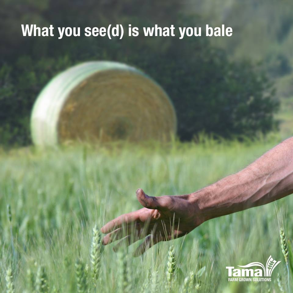 What you see(d) is what you bale