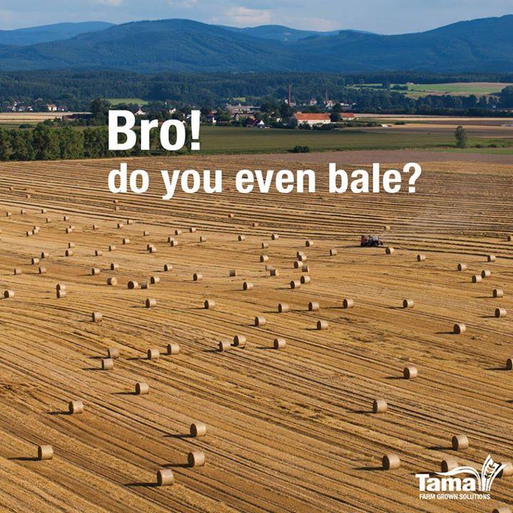 Bro do you even bale?