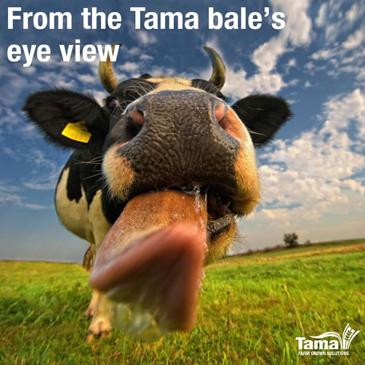From the Tama bale's eye view