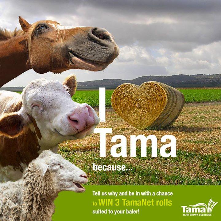 I love Tama because...
