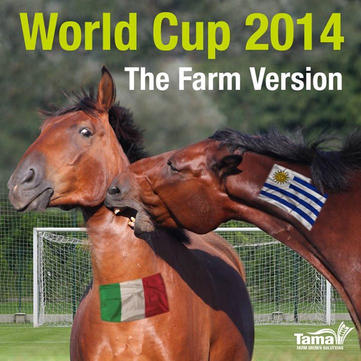 World Cup 2014 - The Farm Version