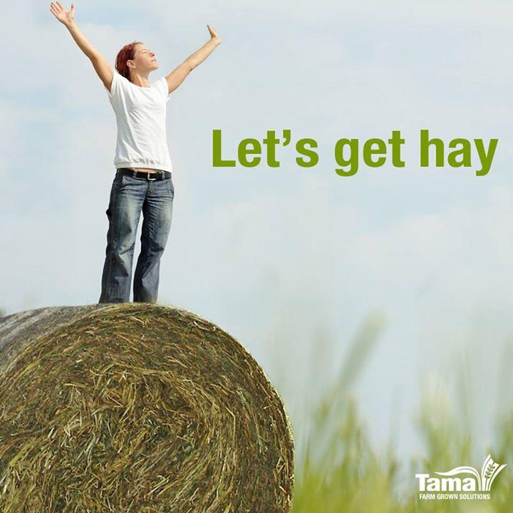 Let's get hay