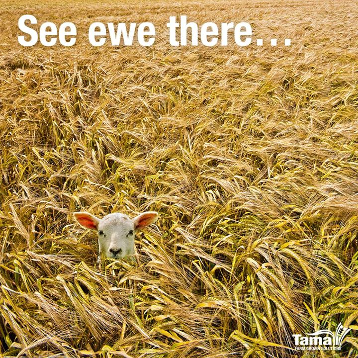 See ewe there...