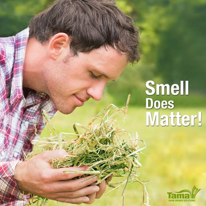 Smell Does Matter!