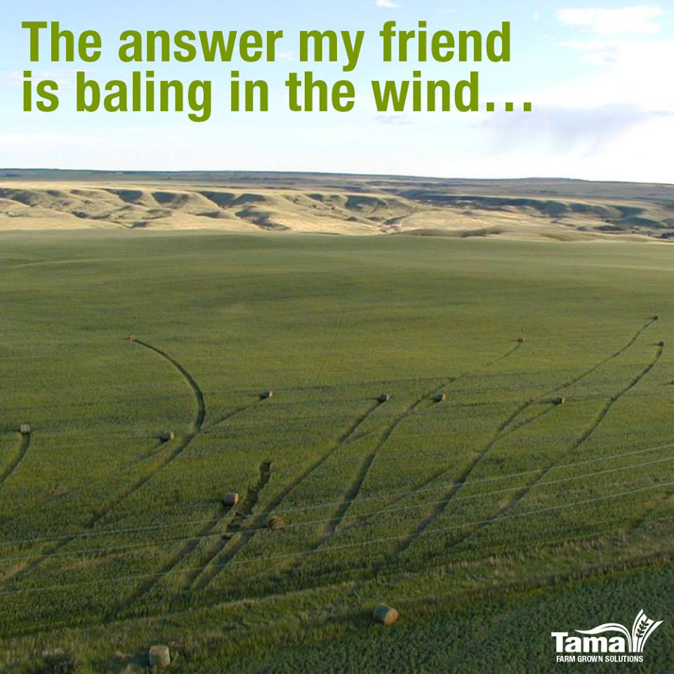 The answer my friend is baling in the wind