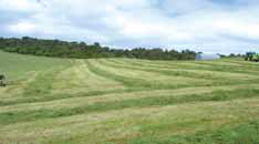 field os silage