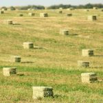 Small Sqare Bales Category