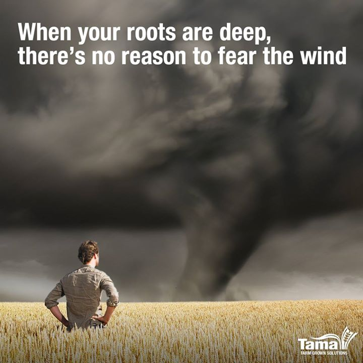 When your roots are deep, there's no reason to fear the wind