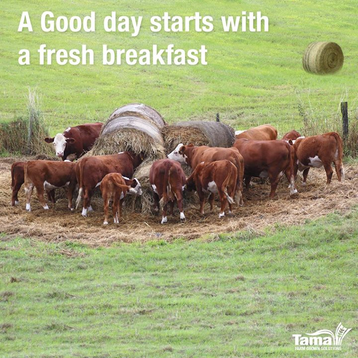 A good day starts with a fresh breakfast