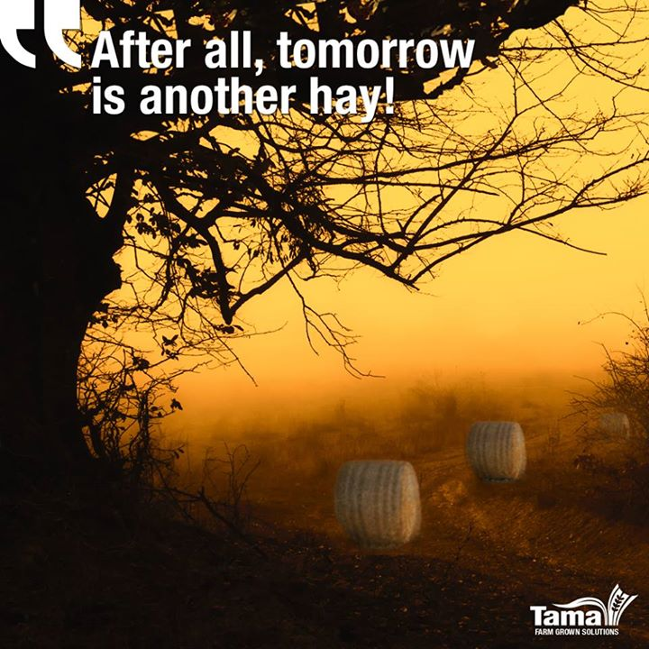 After all, tomorrow is another hay