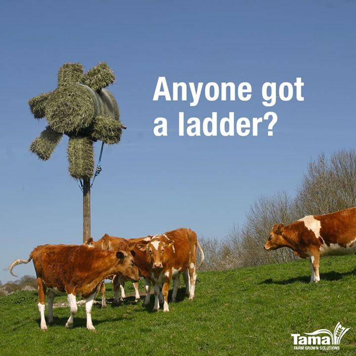 Anyone got a ladder?