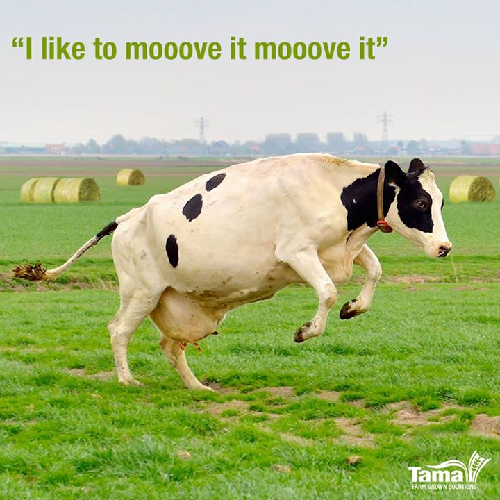 I like to mooove it moooove it