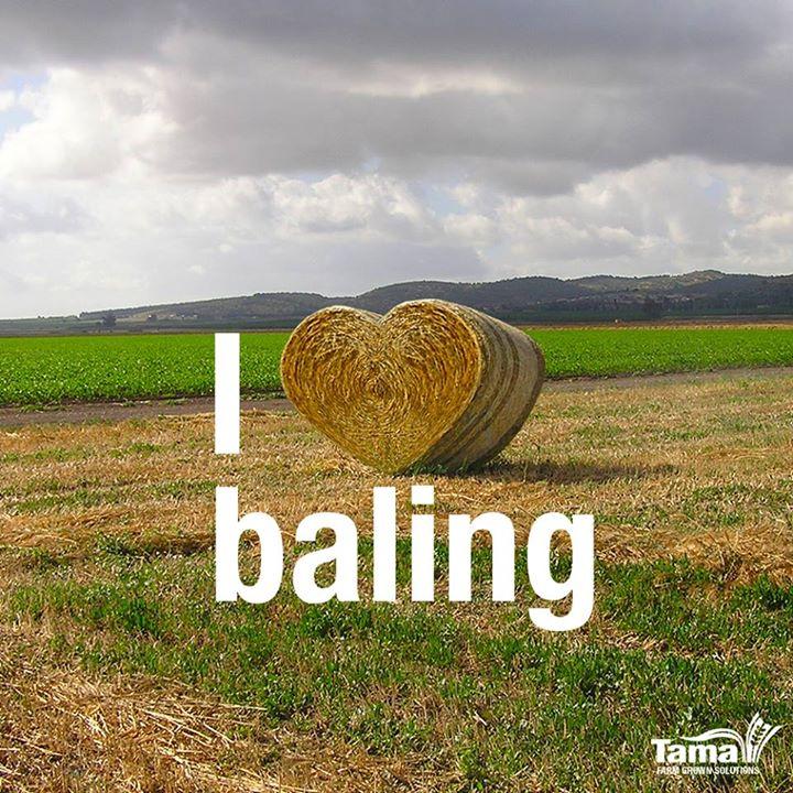 I love baleing