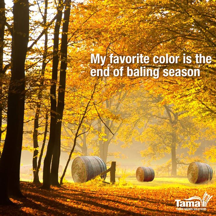 My favorite color is the end of baling season