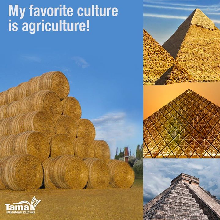 My favorite culture is agriculture