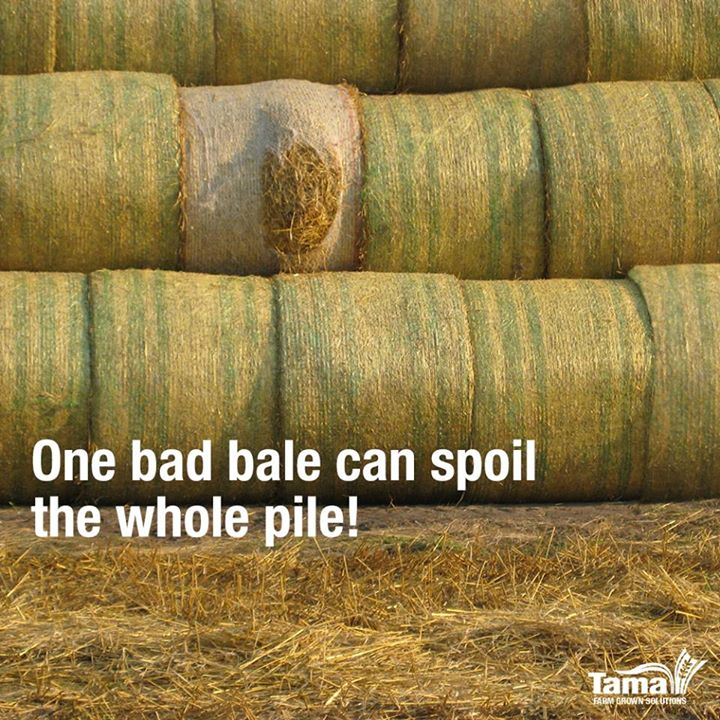 One bad bale can spoil the whole pile!
