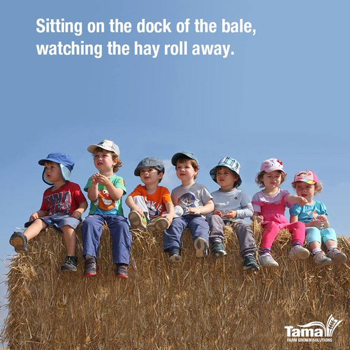Sitting on the dock of the bale