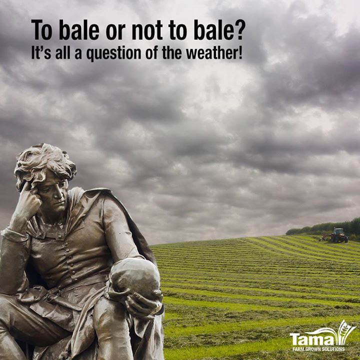 To bale or not to bale