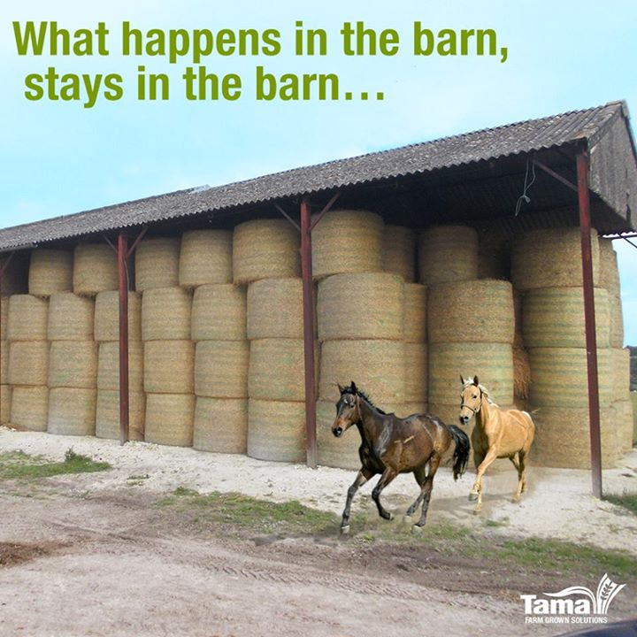 What happens in the barn, stays in the barn...