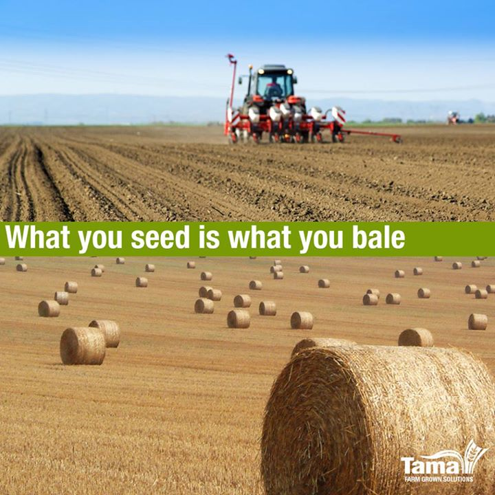 What you seed is what you bale