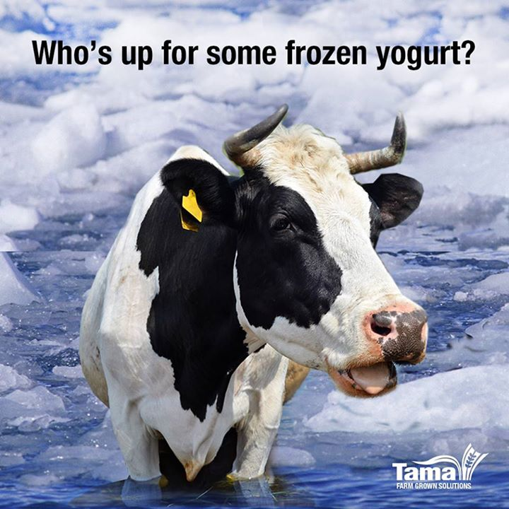 Who's up for some frozen yogurt?