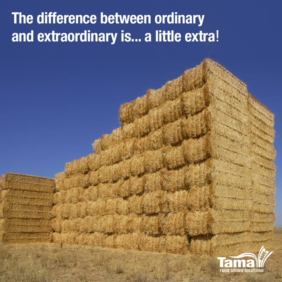 the difference between ordinary and extraordinary is… a