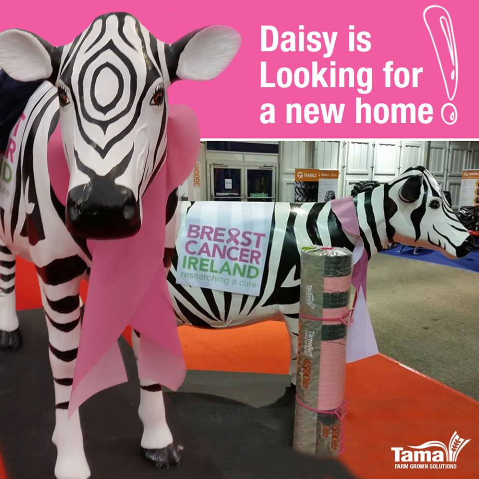 Breast Cancer Ireland - Daisy Life Size Tama Cow
