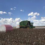 Pink wrap field